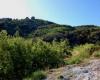 Vente Terrain Mandelieu - Dans un secteur Calme et résidentiel, agréable terrain exposé sud ouest bénficiant d'une magnifique vue dégagée sur le mer, les Iles de Lerins et les collines du Tanneron